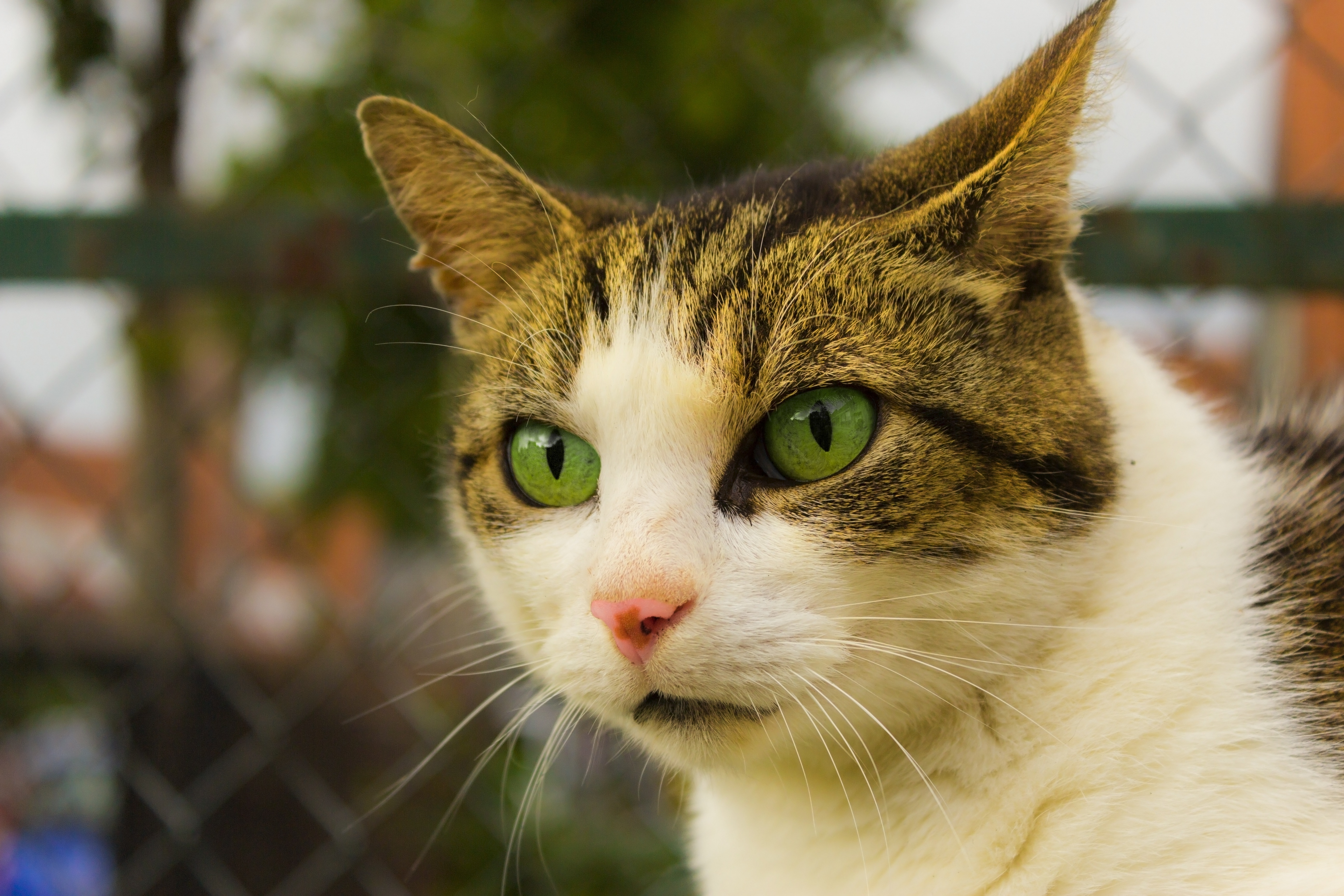 120858 download wallpaper Animals, Cat, Muzzle, Spotted, Spotty, Green Eyed, Green-Eyed screensavers and pictures for free