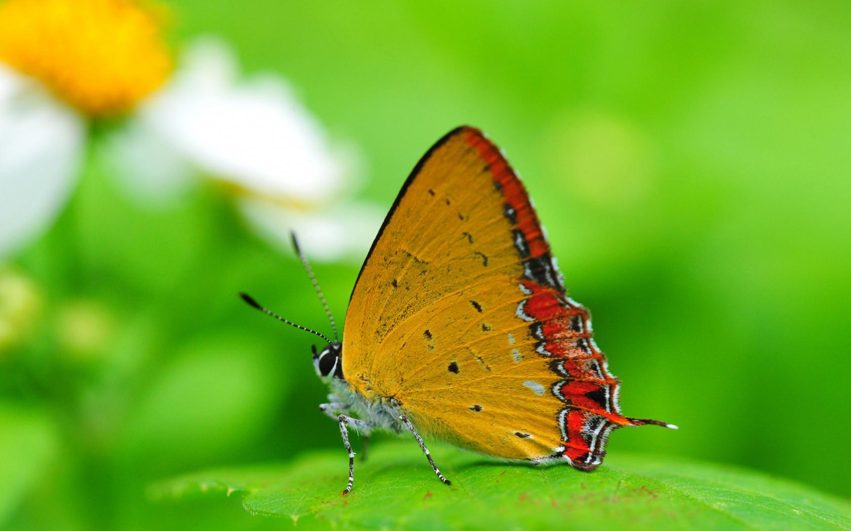 34249 скачать обои Бабочки, Насекомые - заставки и картинки бесплатно