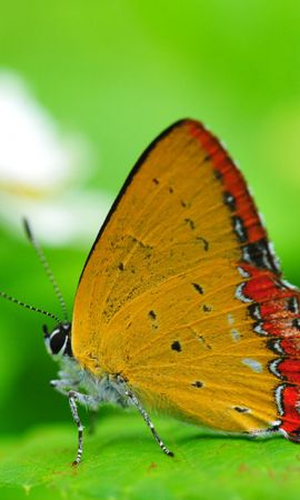 34249 Salvapantallas y fondos de pantalla Insectos en tu teléfono. Descarga imágenes de Mariposas, Insectos gratis