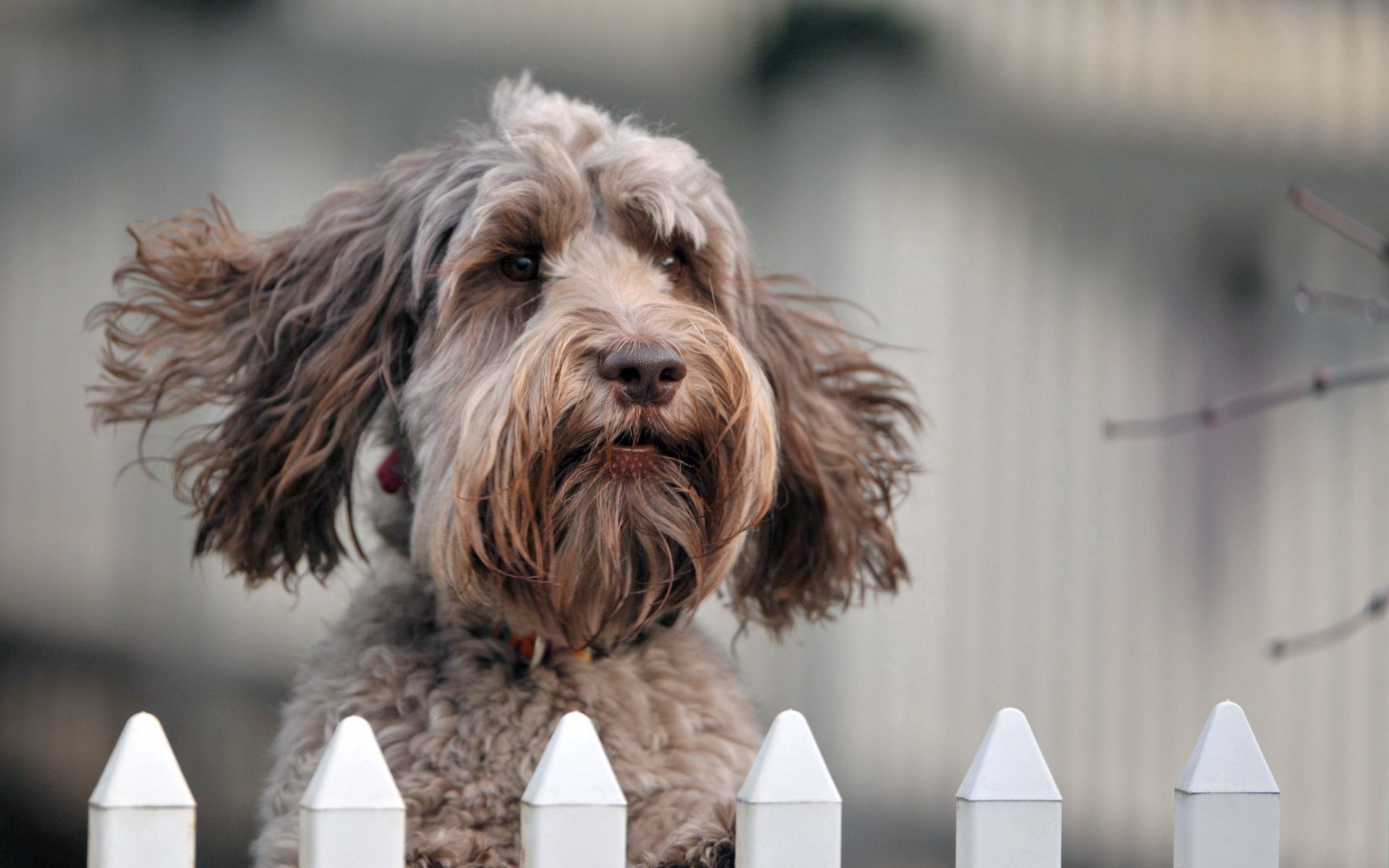115968 download wallpaper Animals, Dog, Muzzle, Wind, Fence, Puppy screensavers and pictures for free