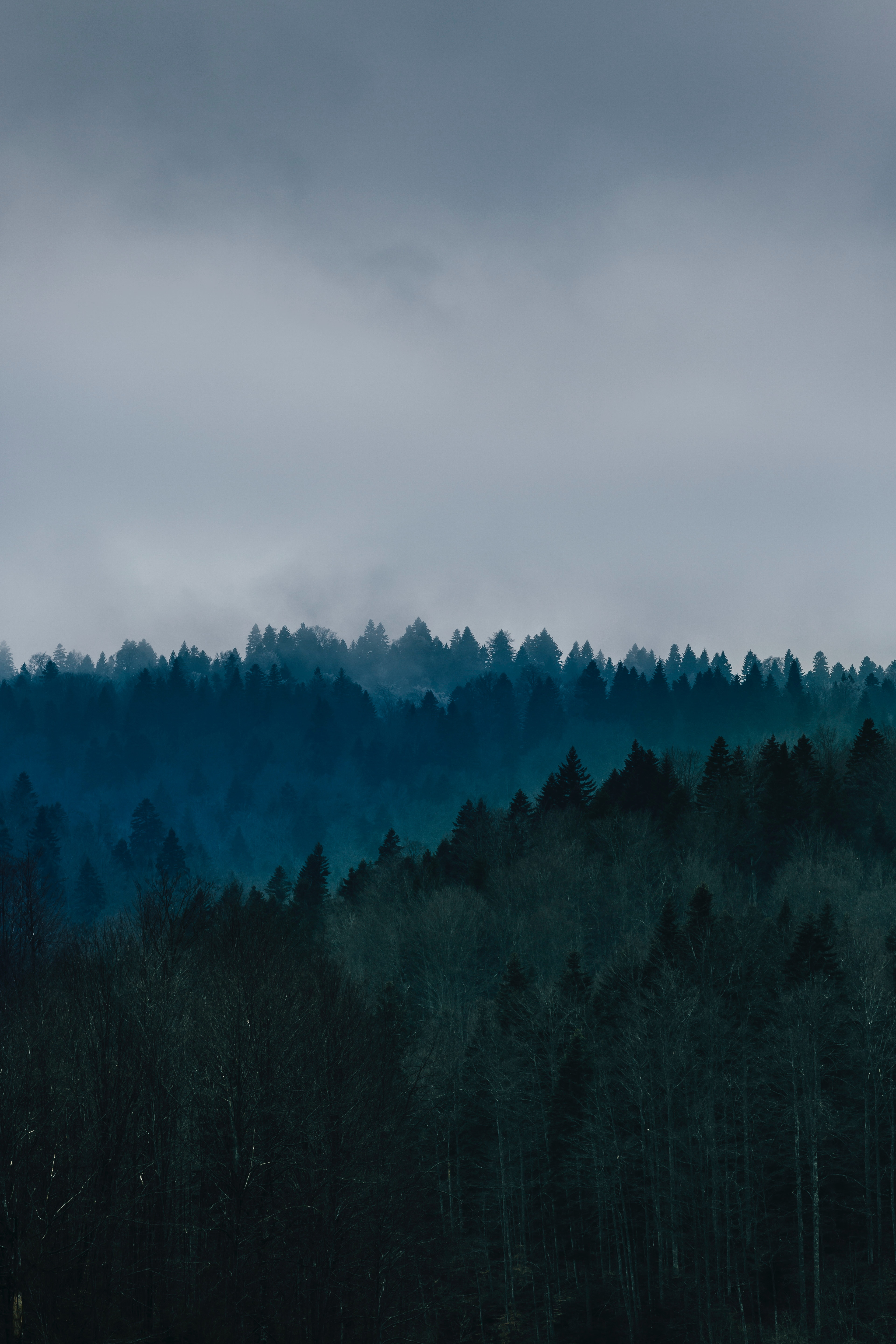 64864 download wallpaper Trees, Nature, Sky, View From Above, Forest, Fog screensavers and pictures for free