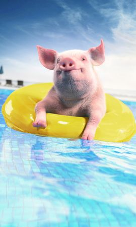 139843 download wallpaper Animals, Pig, Inflatable Circle, Funny, Animal, Pool screensavers and pictures for free