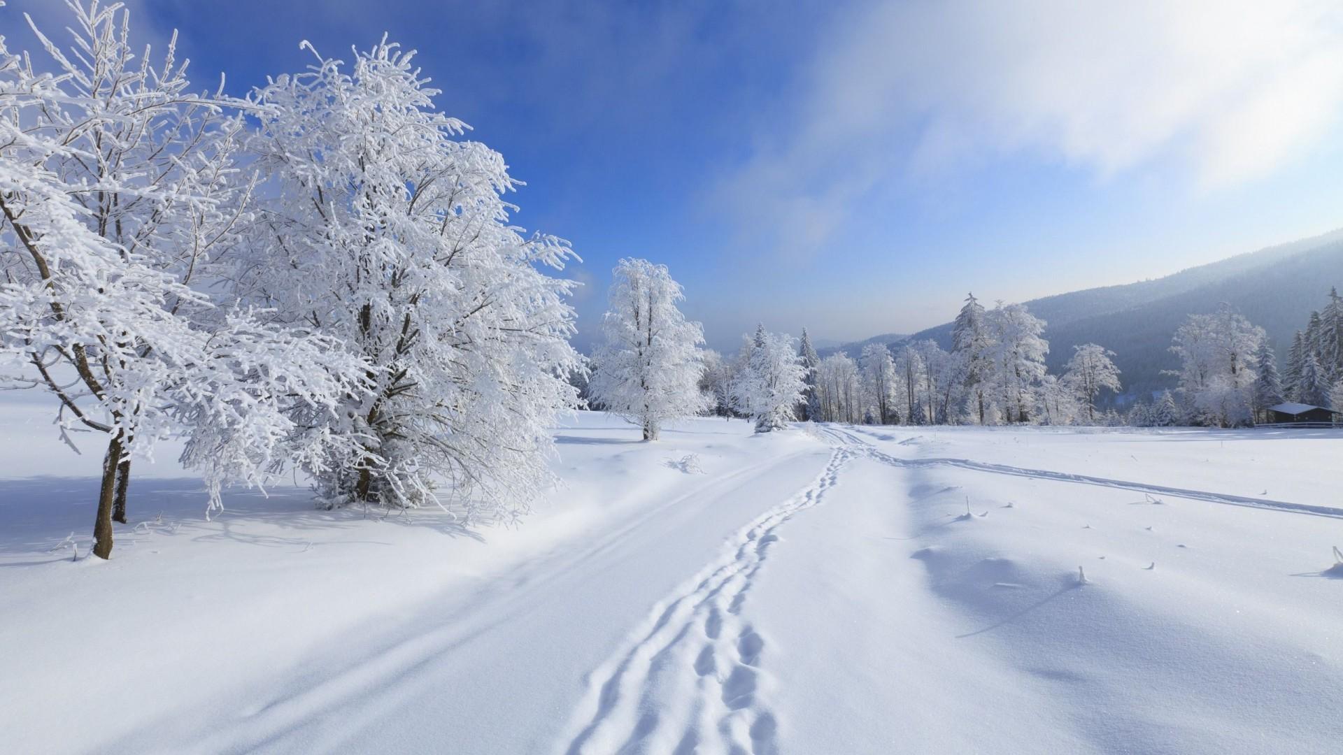 27740 descargar fondo de pantalla Paisaje, Invierno, Árboles, Nieve: protectores de pantalla e imágenes gratis
