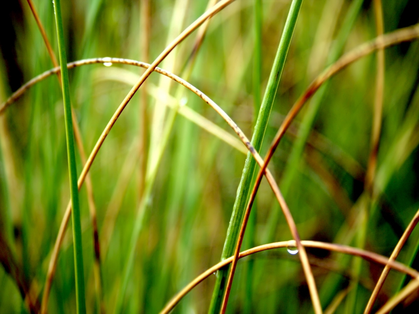 26897 download wallpaper Plants, Grass, Drops screensavers and pictures for free