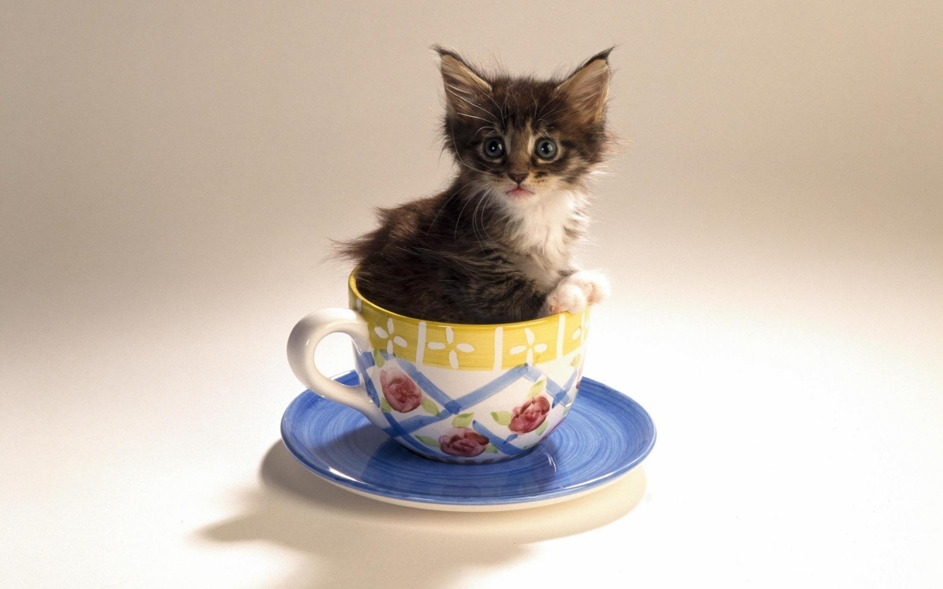 40401 скачать обои Животные, Кошки (Коты, Котики) - заставки и картинки бесплатно