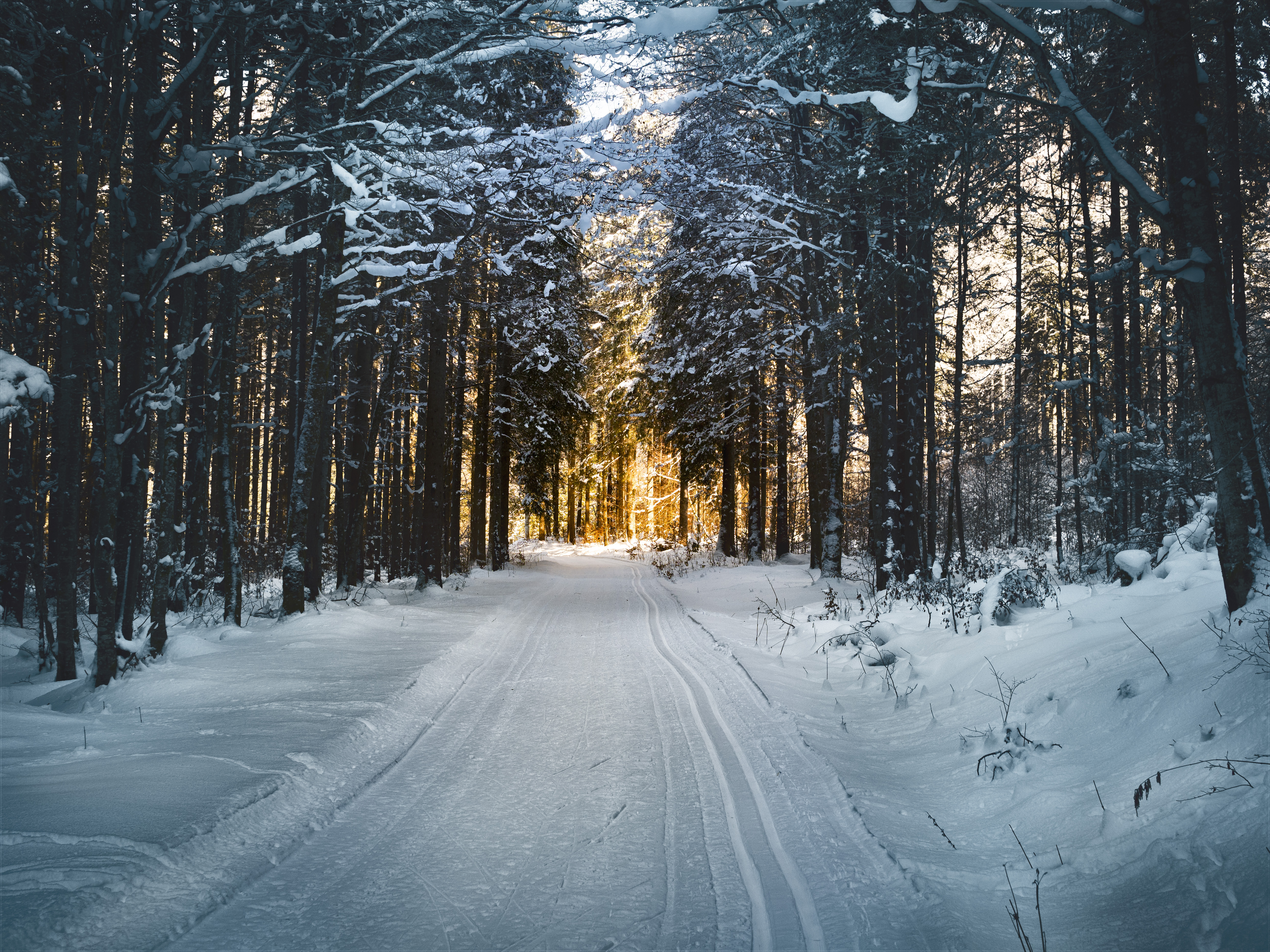 108376 Screensavers and Wallpapers Road for phone. Download Snow, Nature, Winter, Trees, Road pictures for free