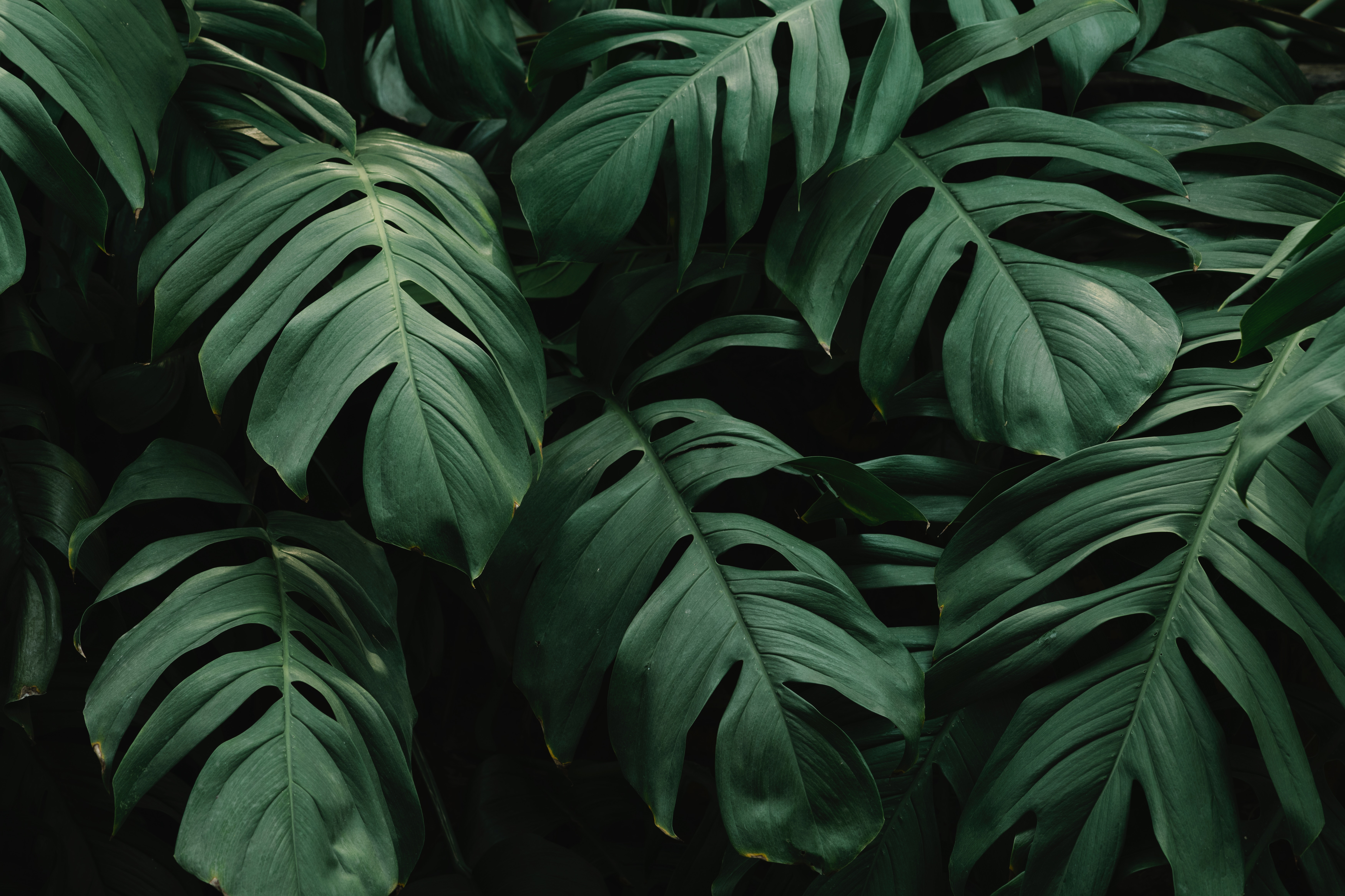 117584 download wallpaper Leaves, Dark, Nature, Plant, Vegetation screensavers and pictures for free