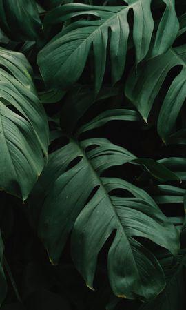 117584携帯電話用の緑壁紙を無料でダウンロード、自然, 葉, 工場, 植物, 闇, 暗い, 植生 緑写真と携帯電話用スクリーンセーバー