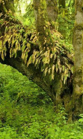 25169 скачать обои Растения, Пейзаж, Деревья - заставки и картинки бесплатно