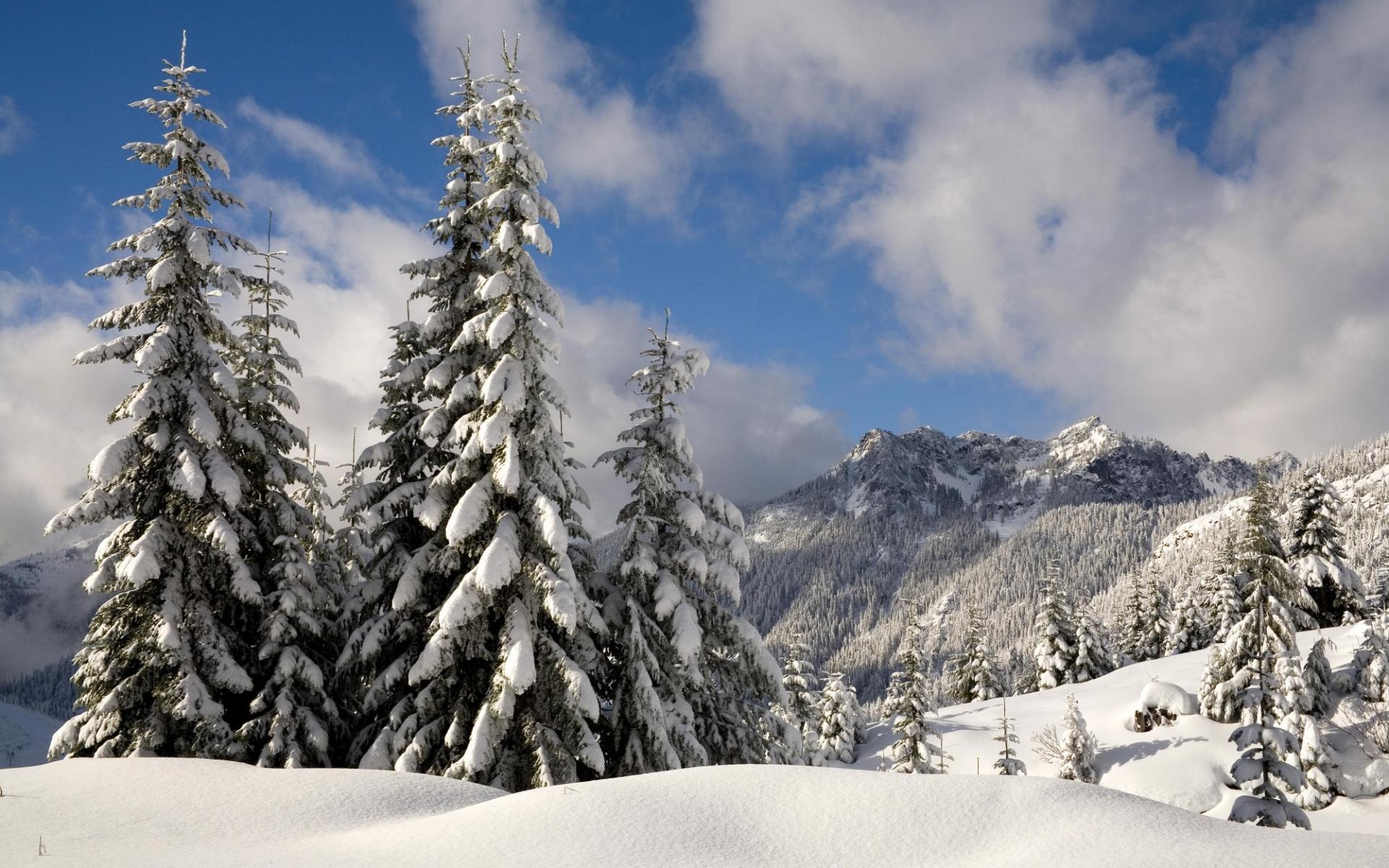 3762 скачать обои Пейзаж, Зима, Деревья, Снег, Елки - заставки и картинки бесплатно