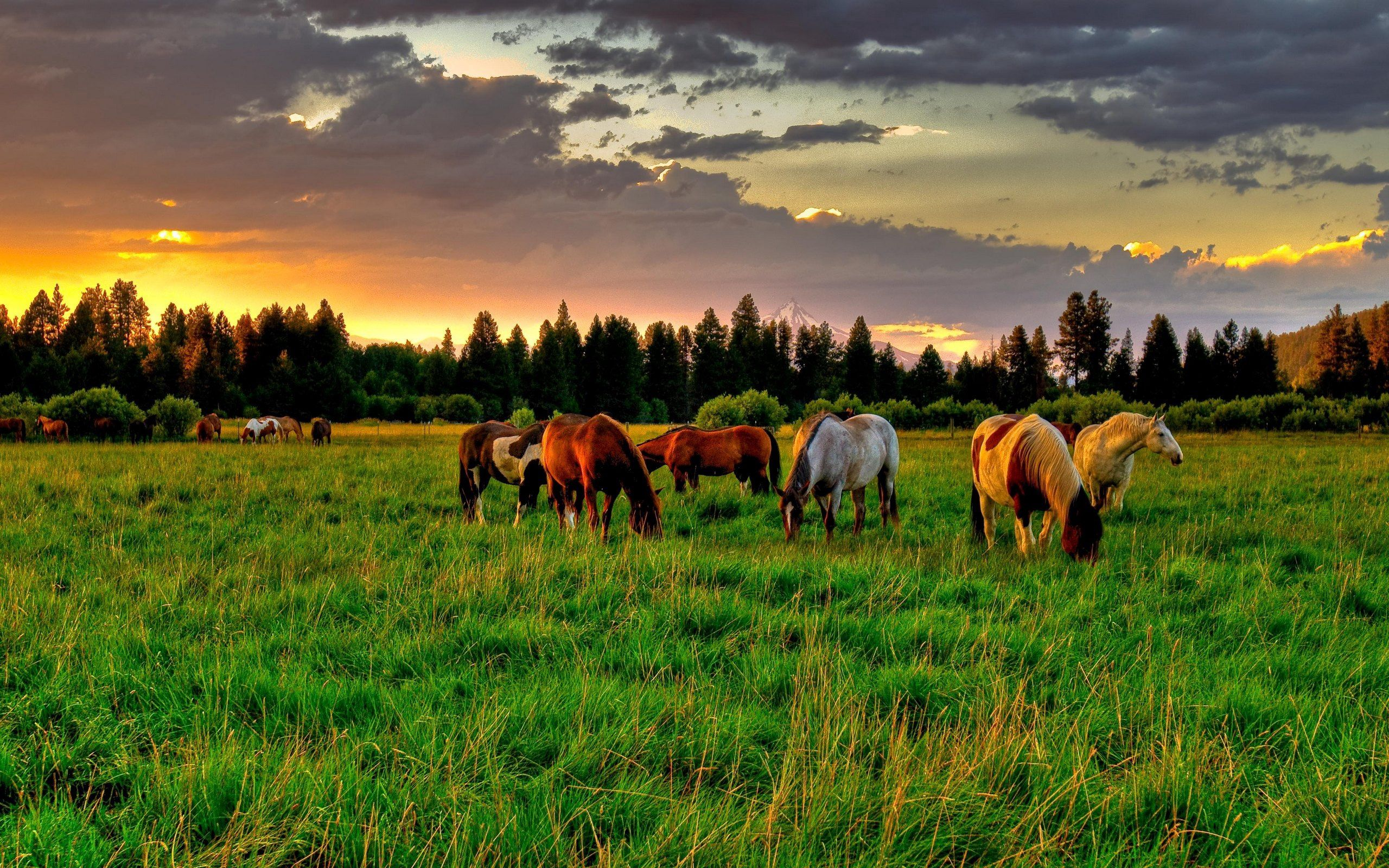 154960 скачать обои Животные, Лошади, Поле, Закат, Еда - заставки и картинки бесплатно