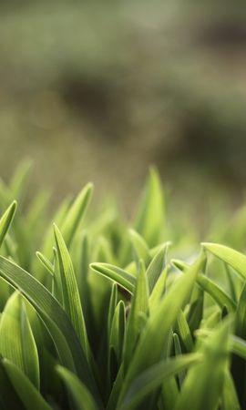 21381 descargar fondo de pantalla Plantas, Hierba: protectores de pantalla e imágenes gratis