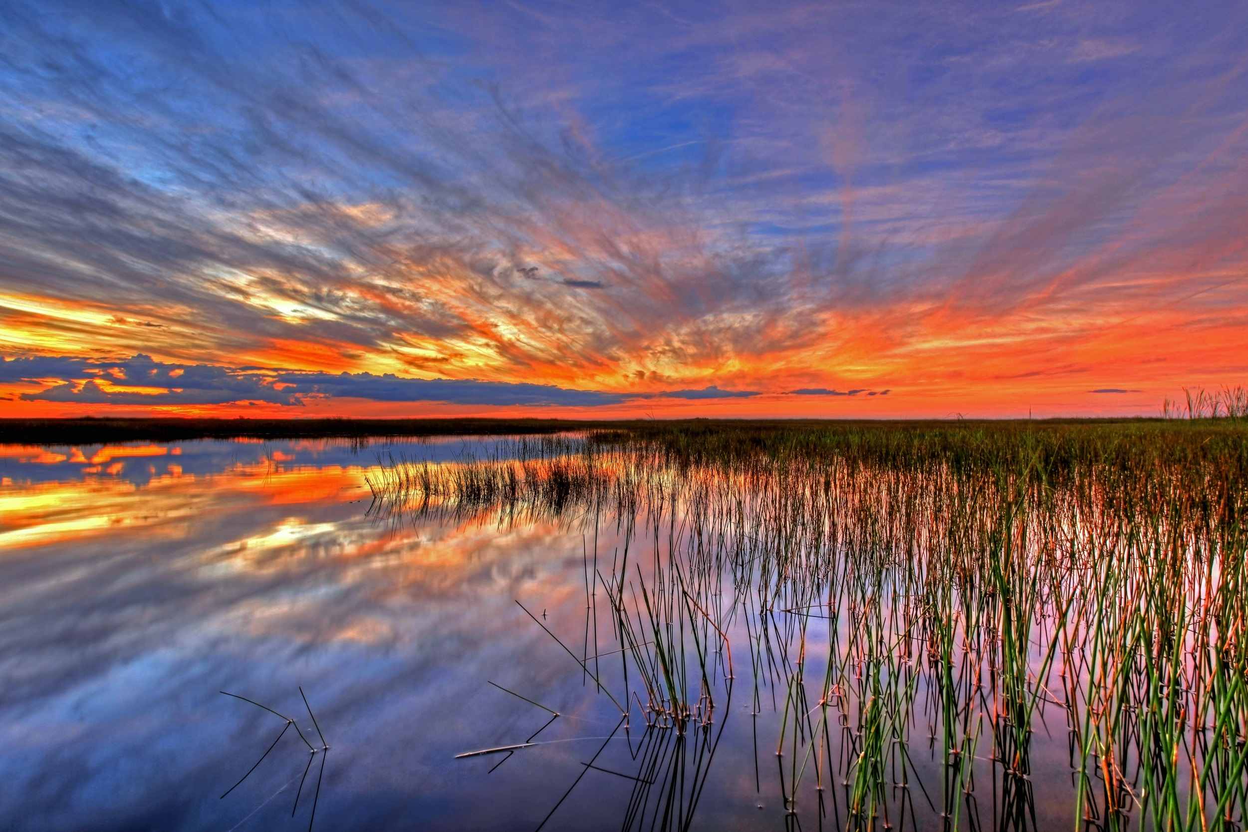 82392 free wallpaper 1080x2400 for phone, download images Nature, Swamp, Usa, United States, Florida, Everglades 1080x2400 for mobile