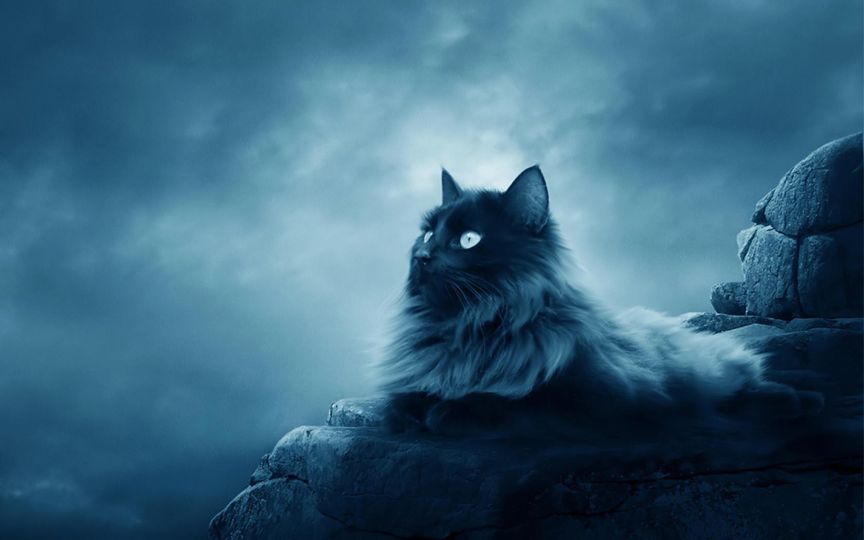 39604 Заставки и Обои Кошки (Коты, Котики) на телефон. Скачать Кошки (Коты, Котики), Животные картинки бесплатно