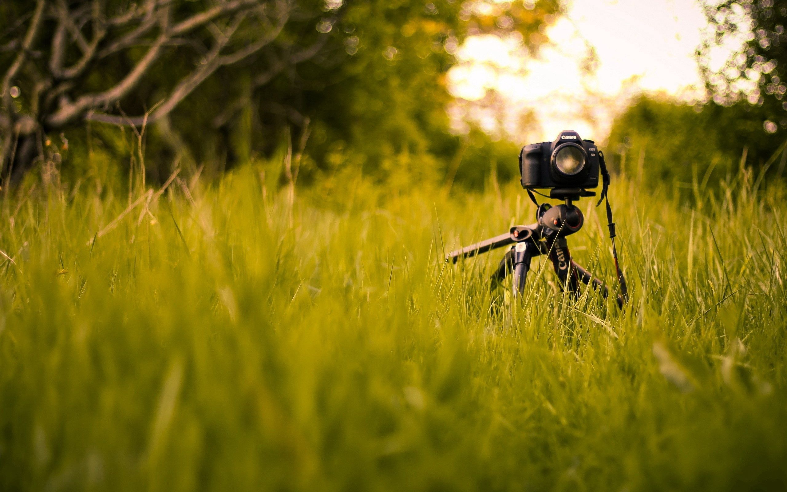 82849 download wallpaper Grass, Miscellanea, Miscellaneous, Camera, Tripod screensavers and pictures for free
