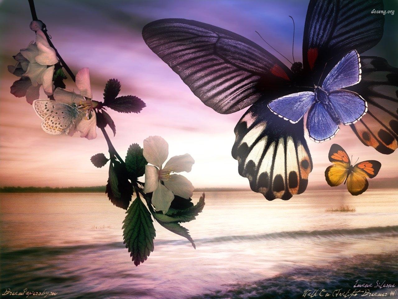 13746 скачать обои Бабочки, Насекомые - заставки и картинки бесплатно