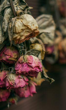 118870 скачать обои Цветы, Сухой, Гербарий, Розы - заставки и картинки бесплатно