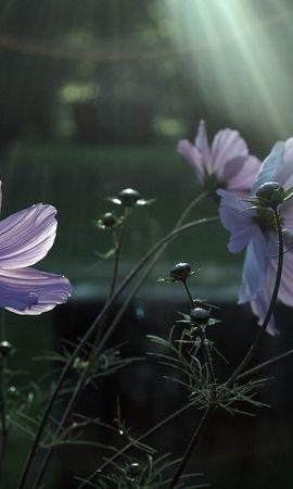 47690 скачать обои Растения, Цветы - заставки и картинки бесплатно
