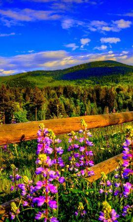 28026 скачать обои Пейзаж, Цветы, Горы, Облака - заставки и картинки бесплатно