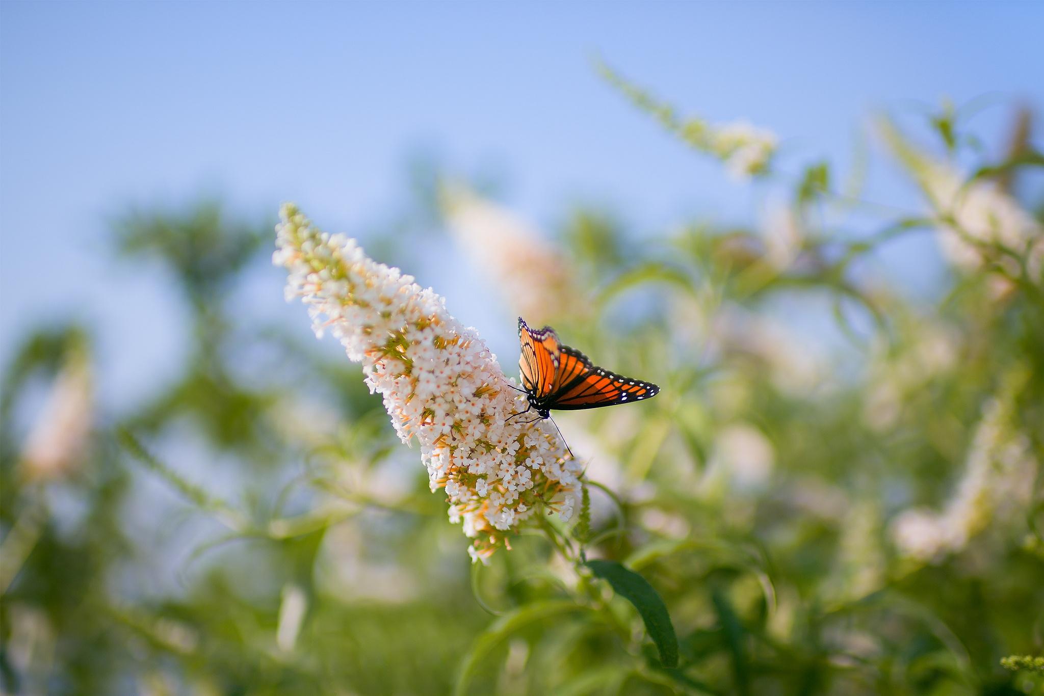 114916 скачать обои Животные, Бабочка, Листья, Трава, Насекомое, Узоры - заставки и картинки бесплатно