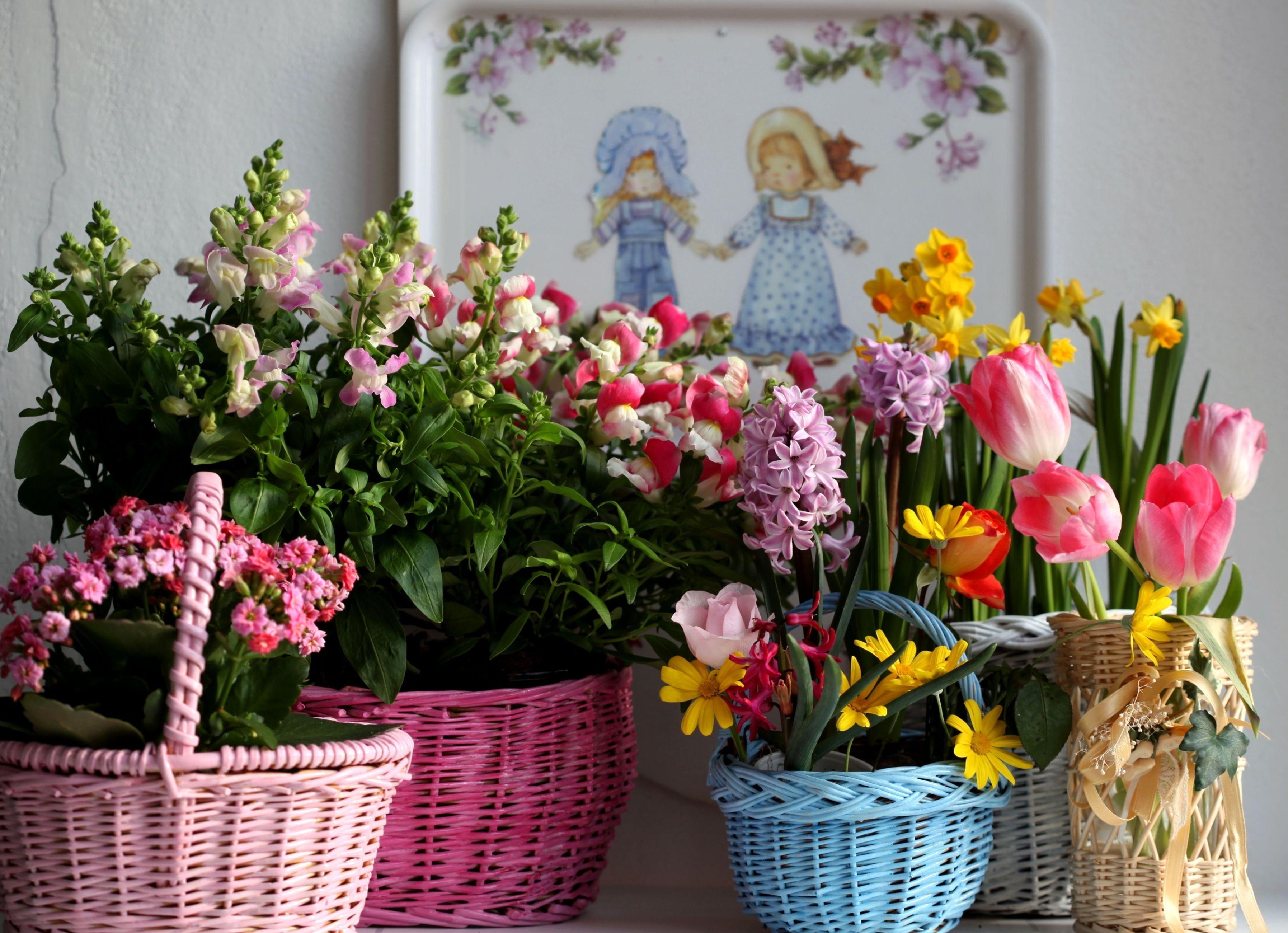 155683 Заставки и Обои Нарциссы на телефон. Скачать Тюльпаны, Цветы, Нарциссы, Гиацинт, Корзины, Разнообразие, Каланхоэ, Фрезия картинки бесплатно