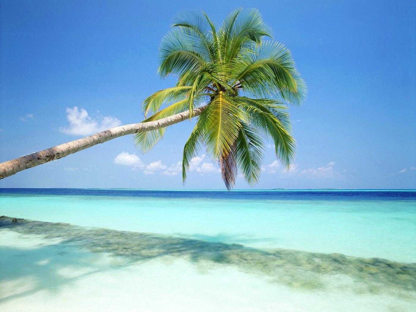 25818 télécharger le fond d'écran Plantes, Paysage, Mer, Plage, Palms - économiseurs d'écran et images gratuitement