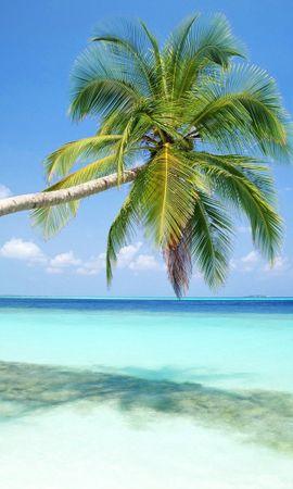 25818 скачать обои Растения, Пейзаж, Море, Пляж, Пальмы - заставки и картинки бесплатно