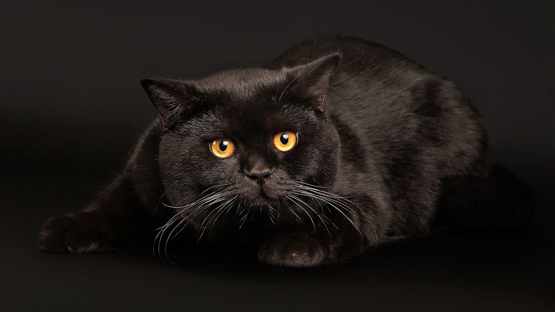 62303 download wallpaper Animals, Cat, Black Cat, To Lie Down, Lie, Fright, Dark Background screensavers and pictures for free