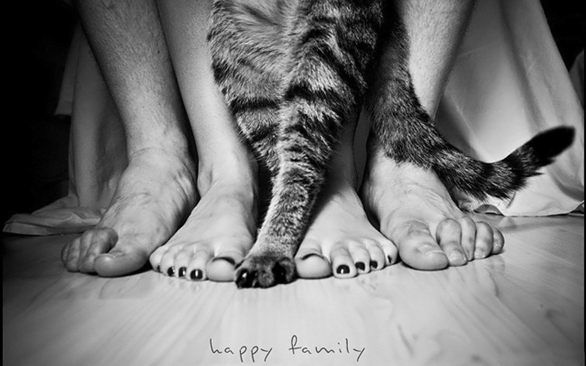63021 скачать обои Разное, Ноги, Люди, Кошка, Семья - заставки и картинки бесплатно