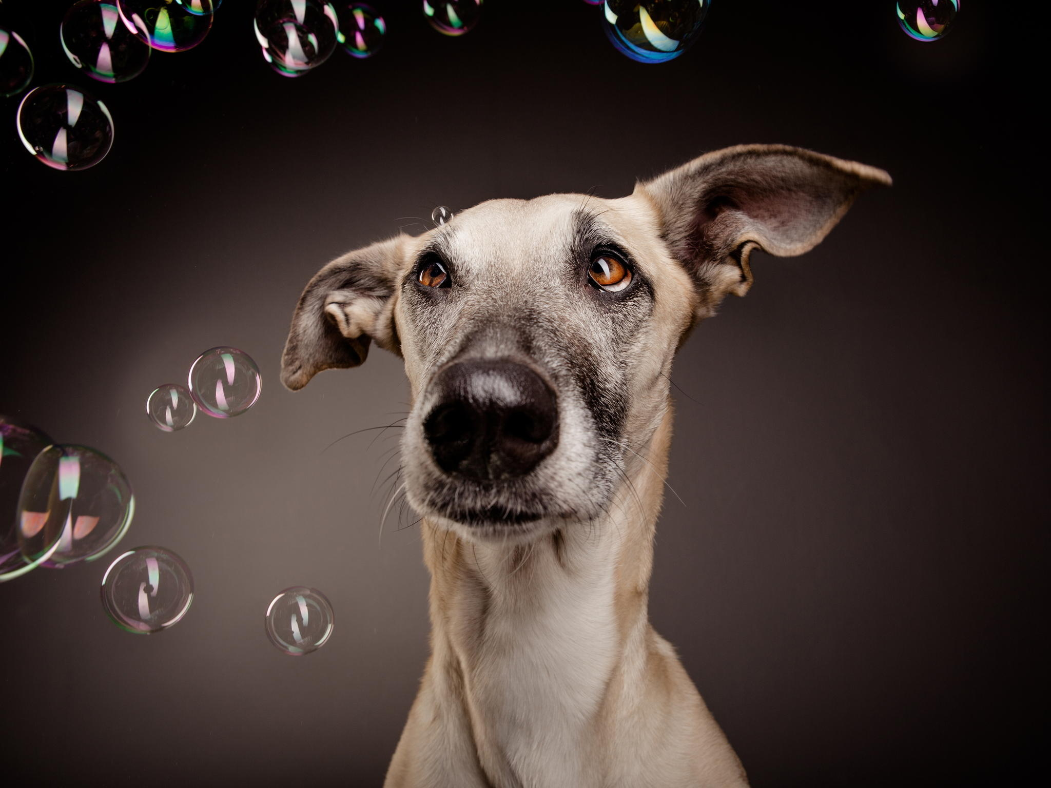 128554 download wallpaper Animals, Dog, Bubble, Bubbles, Surprise, Astonishment screensavers and pictures for free