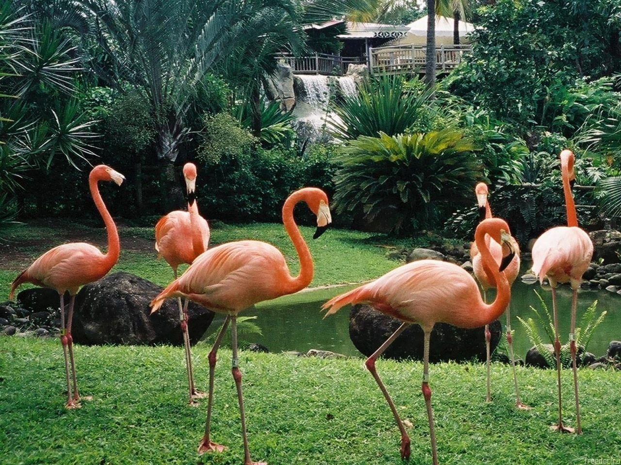 1490 download wallpaper Animals, Birds, Flamingo screensavers and pictures for free