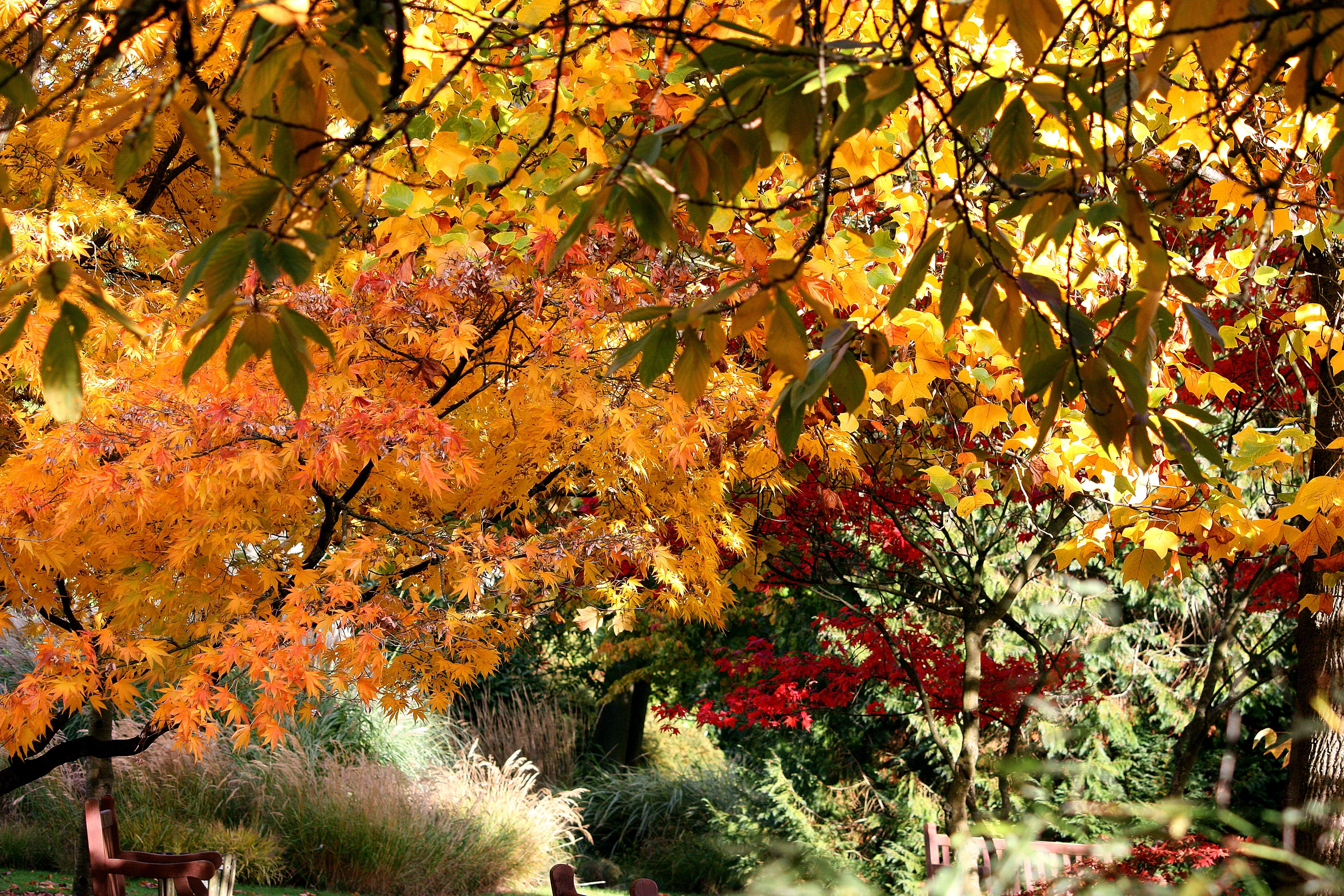 147924 скачать обои Листья, Осень, Природа, Деревья - заставки и картинки бесплатно