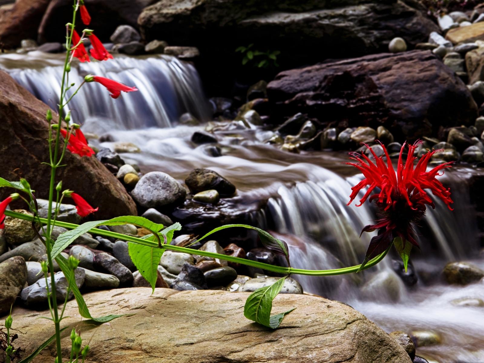 9211 скачать обои Растения, Цветы, Водопады - заставки и картинки бесплатно
