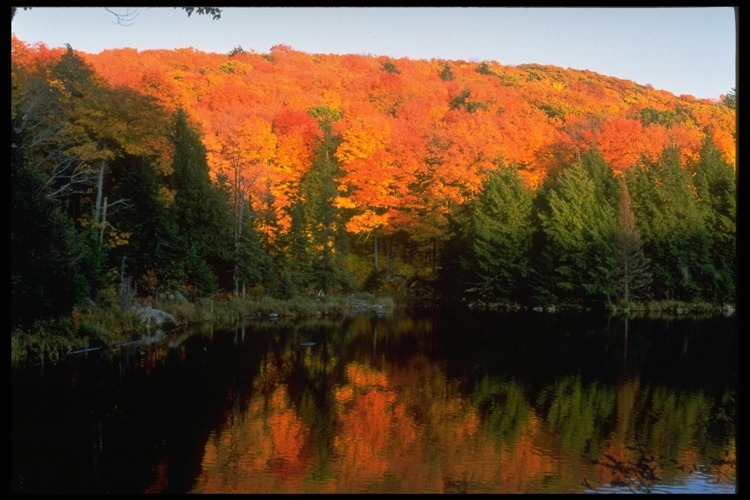10886 скачать обои Пейзаж, Деревья, Осень, Озера - заставки и картинки бесплатно