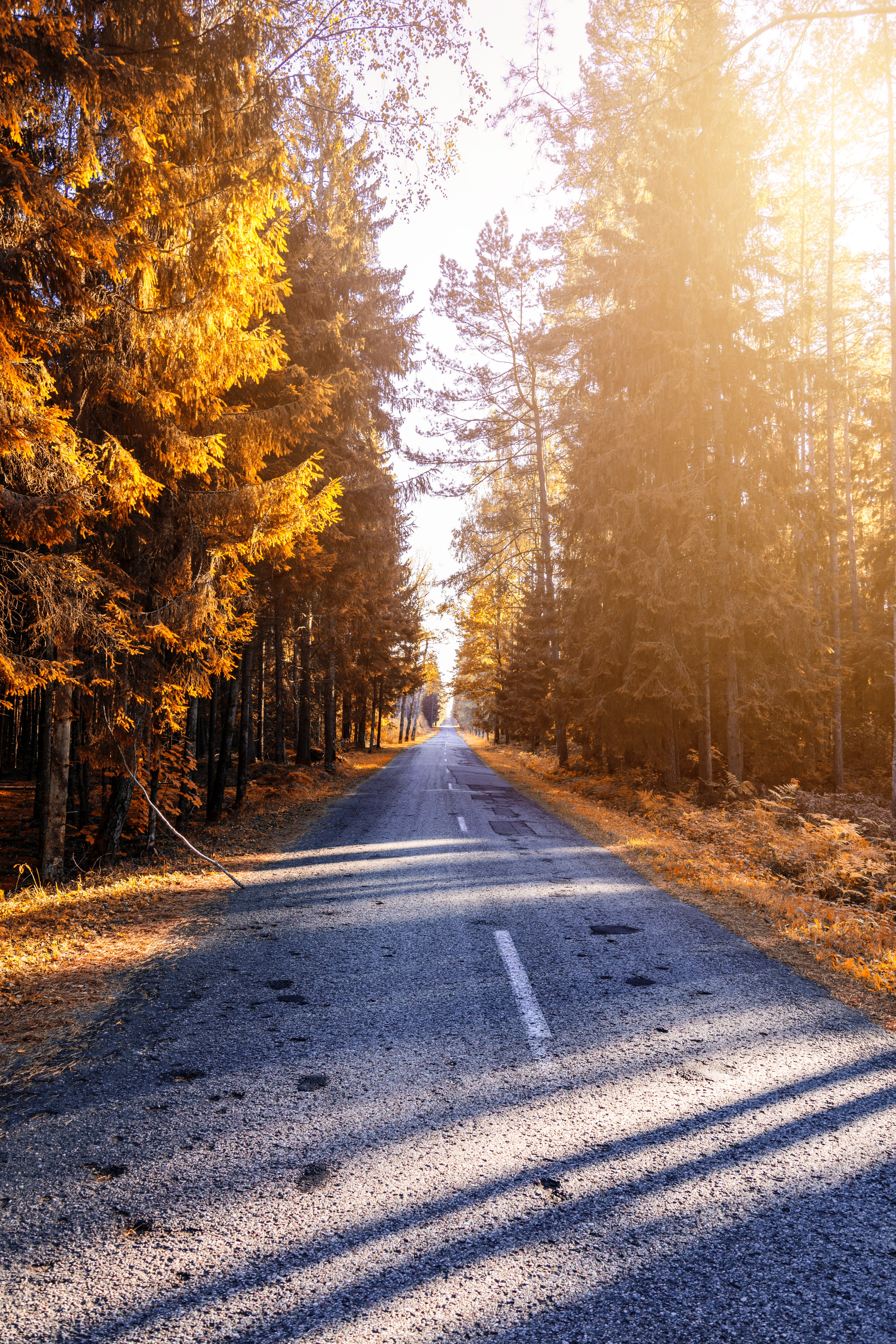150936 Screensavers and Wallpapers Road for phone. Download Autumn, Nature, Road, Forest, Sunlight pictures for free