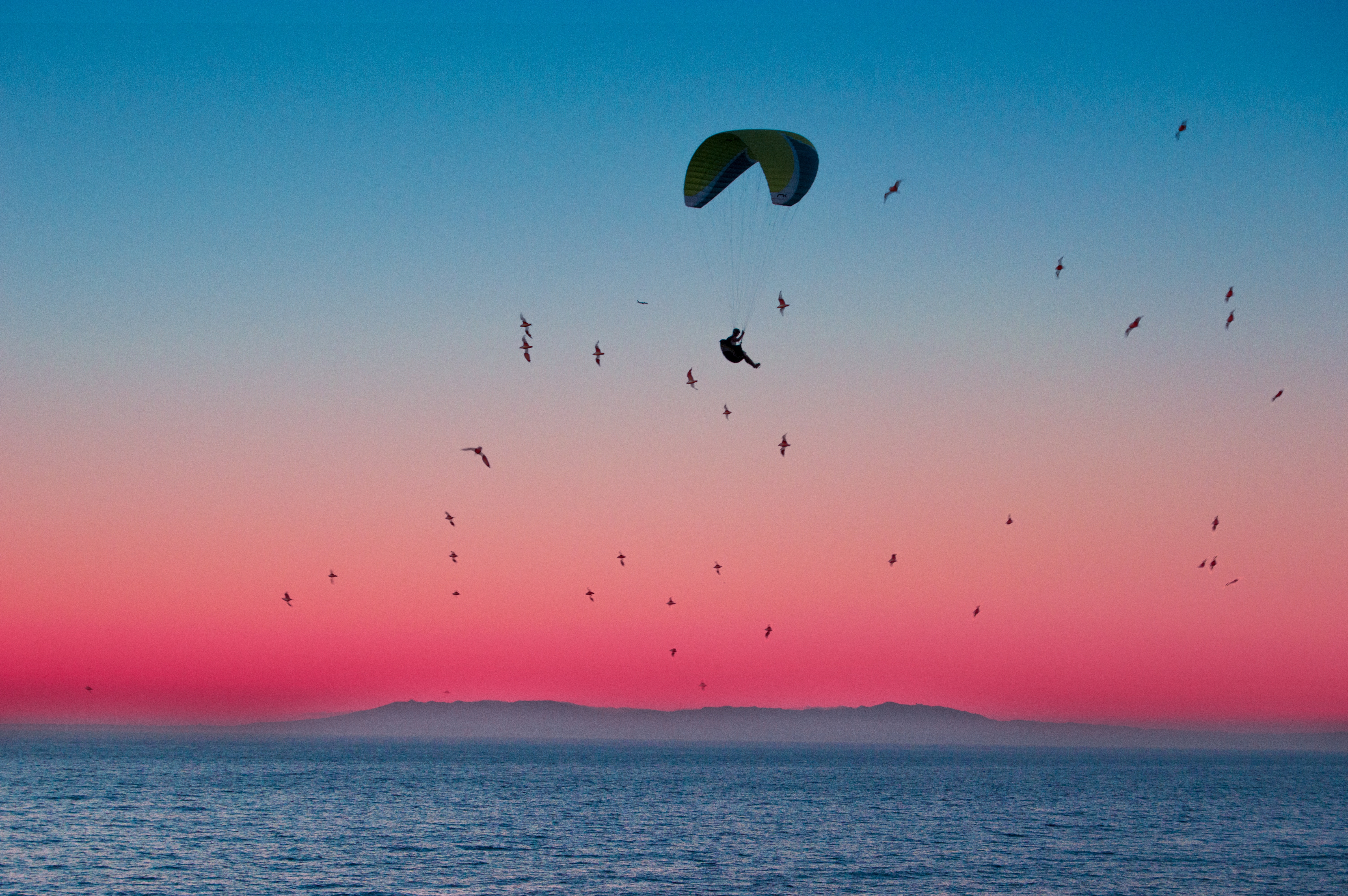 115708 download wallpaper Sports, Birds, Sea, Horizon, Flight, Paragliding, Paraglider, Parachute screensavers and pictures for free