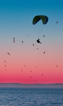115708 Screensavers and Wallpapers Sports for phone. Download Sports, Paragliding, Paraglider, Parachute, Sea, Flight, Horizon, Birds pictures for free