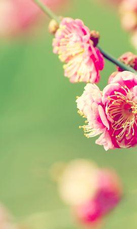 47126 baixar papel de parede Plantas, Flores - protetores de tela e imagens gratuitamente