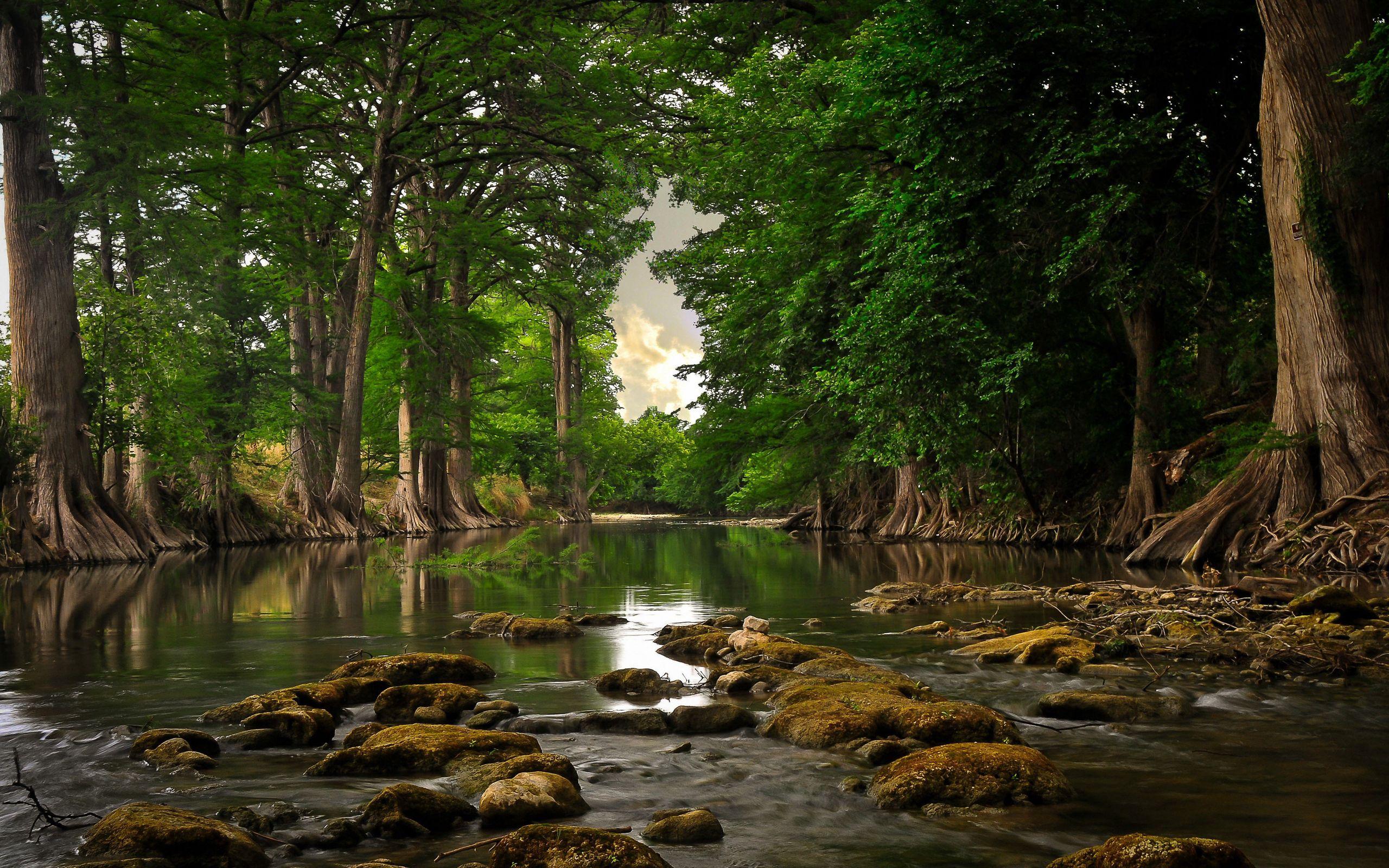 144931 скачать обои Деревья, Природа, Камни, Лето, Река, Мох - заставки и картинки бесплатно