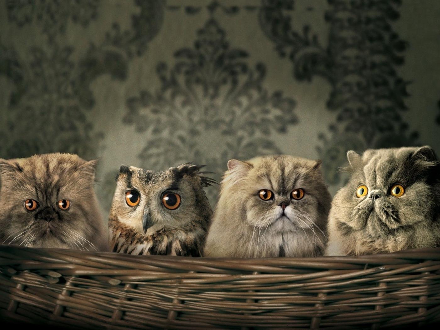 30035 скачать обои Животные, Кошки (Коты, Котики), Совы - заставки и картинки бесплатно