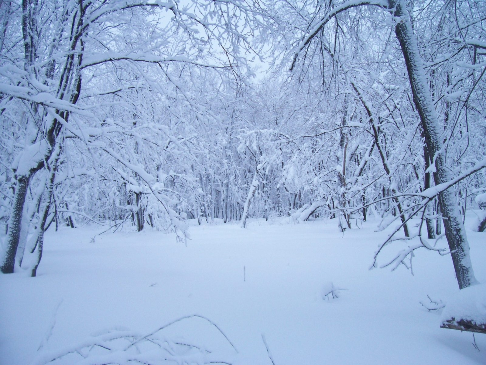 3598 download wallpaper Landscape, Winter, Snow screensavers and pictures for free