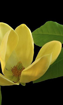 26544 скачать обои Растения, Цветы, Листья - заставки и картинки бесплатно