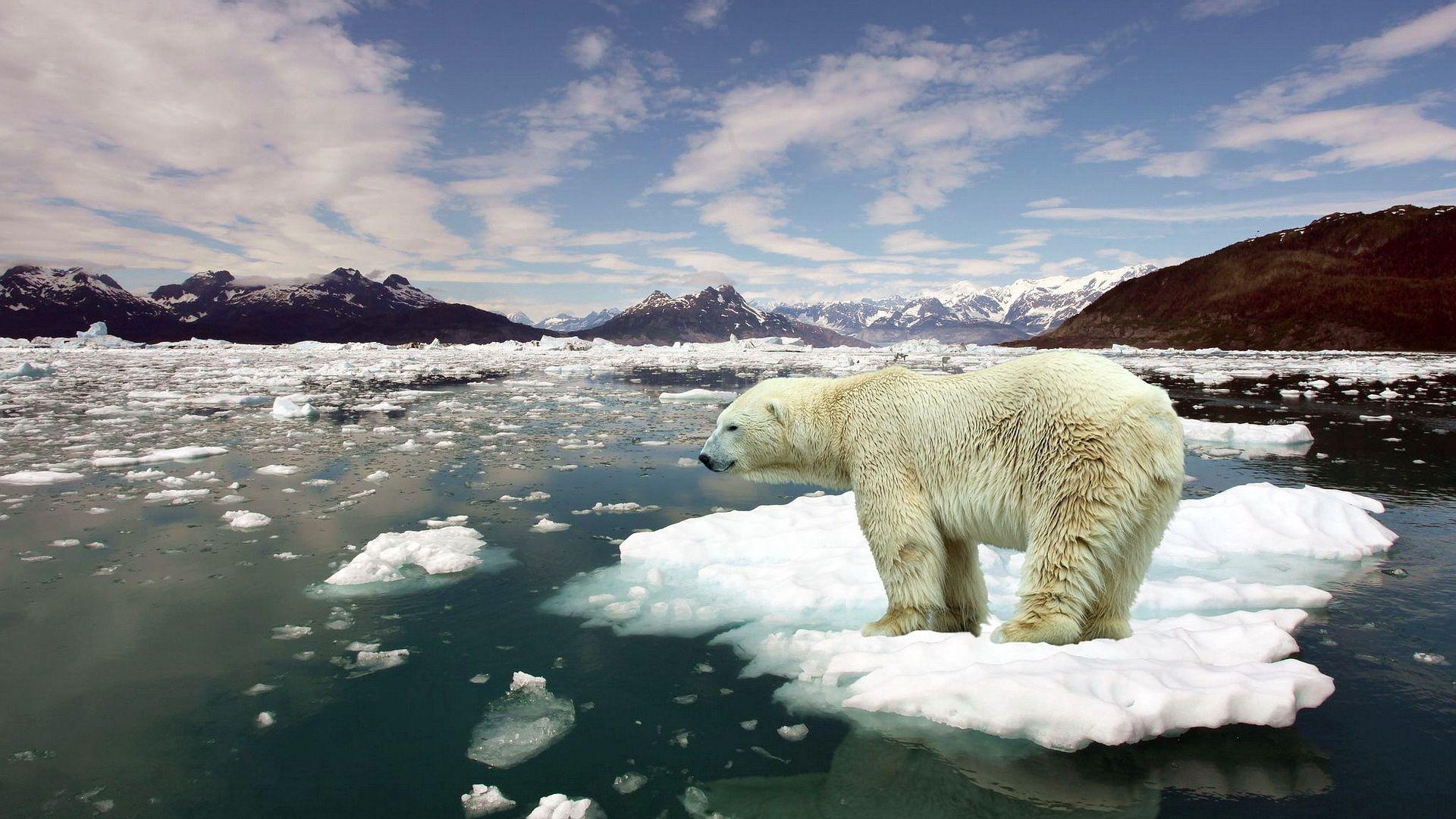 135240 Hintergrundbild herunterladen Tiere, Eis, Schnee, Situation, Eisbär, Polarbär - Bildschirmschoner und Bilder kostenlos