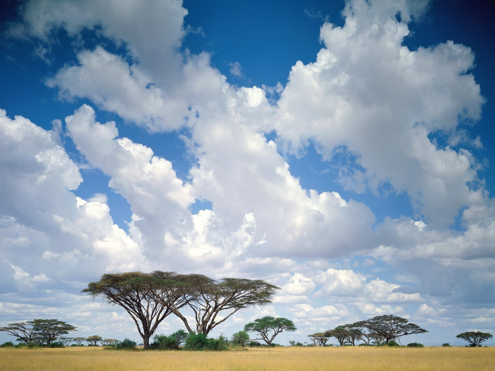 142 download wallpaper Landscape, Trees, Sky, Savanna screensavers and pictures for free