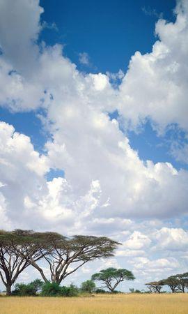 142 скачать обои Пейзаж, Деревья, Небо, Саванна - заставки и картинки бесплатно