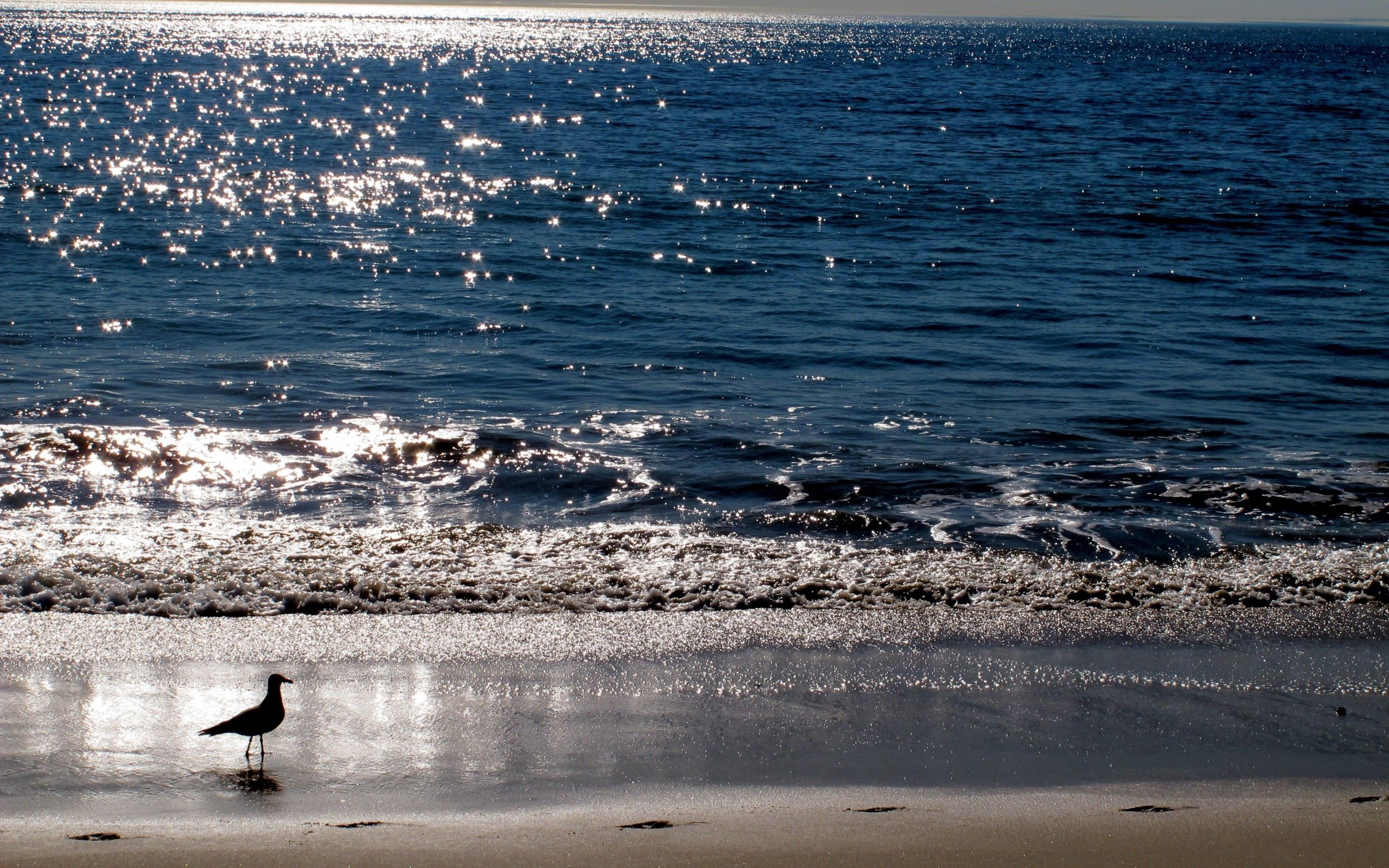 93932 download wallpaper Animals, Gull, Seagull, Sea, Sunset, Bird screensavers and pictures for free
