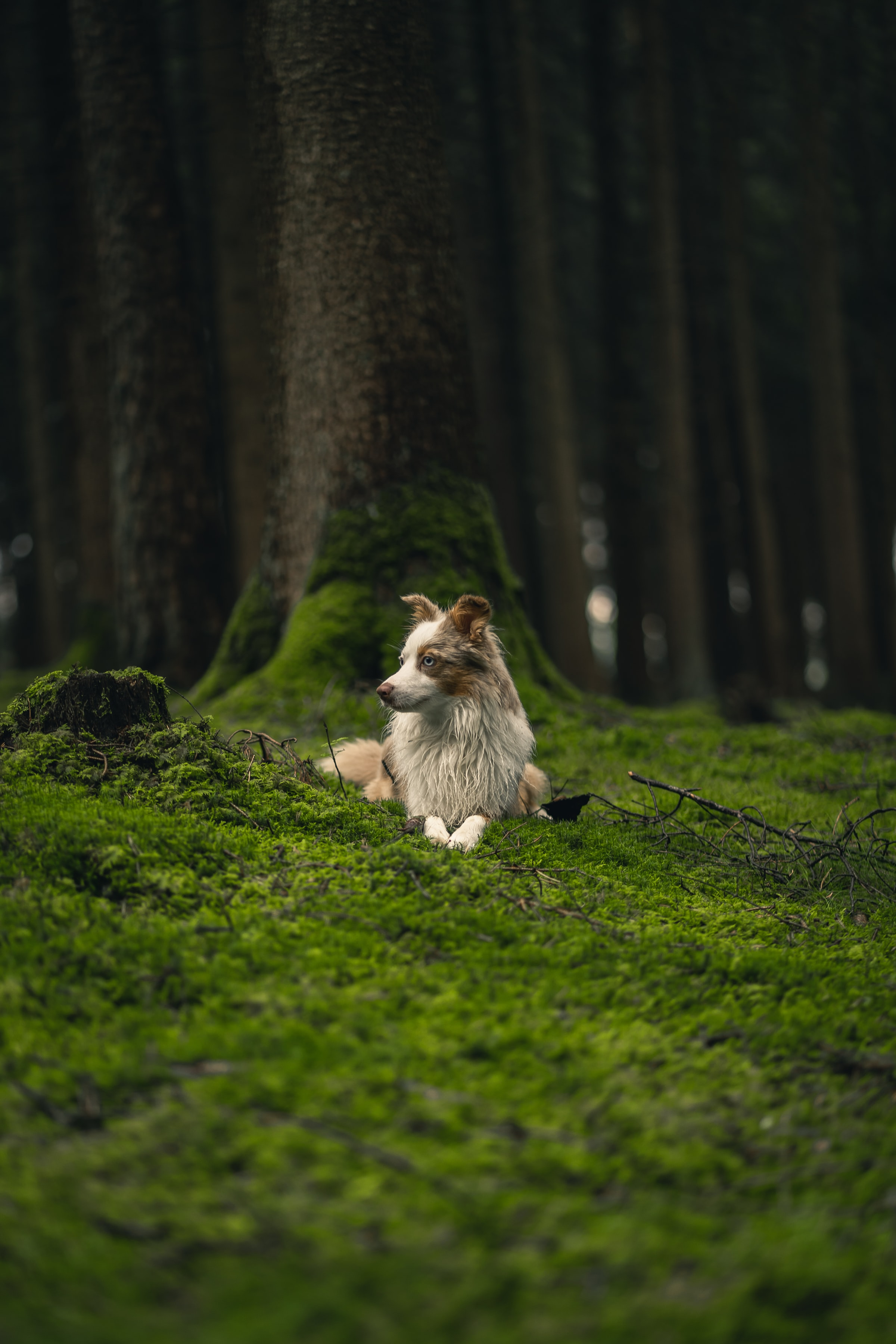 117400 Screensavers and Wallpapers Pet for phone. Download Animals, Dog, Pet, Profile, Sight, Opinion, Grass pictures for free
