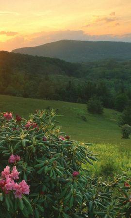 2381 скачать обои Растения, Пейзаж, Цветы, Закат, Солнце - заставки и картинки бесплатно