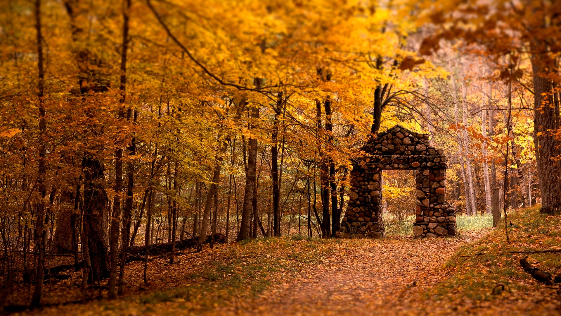 27829 download wallpaper Landscape, Trees, Autumn, Leaves screensavers and pictures for free