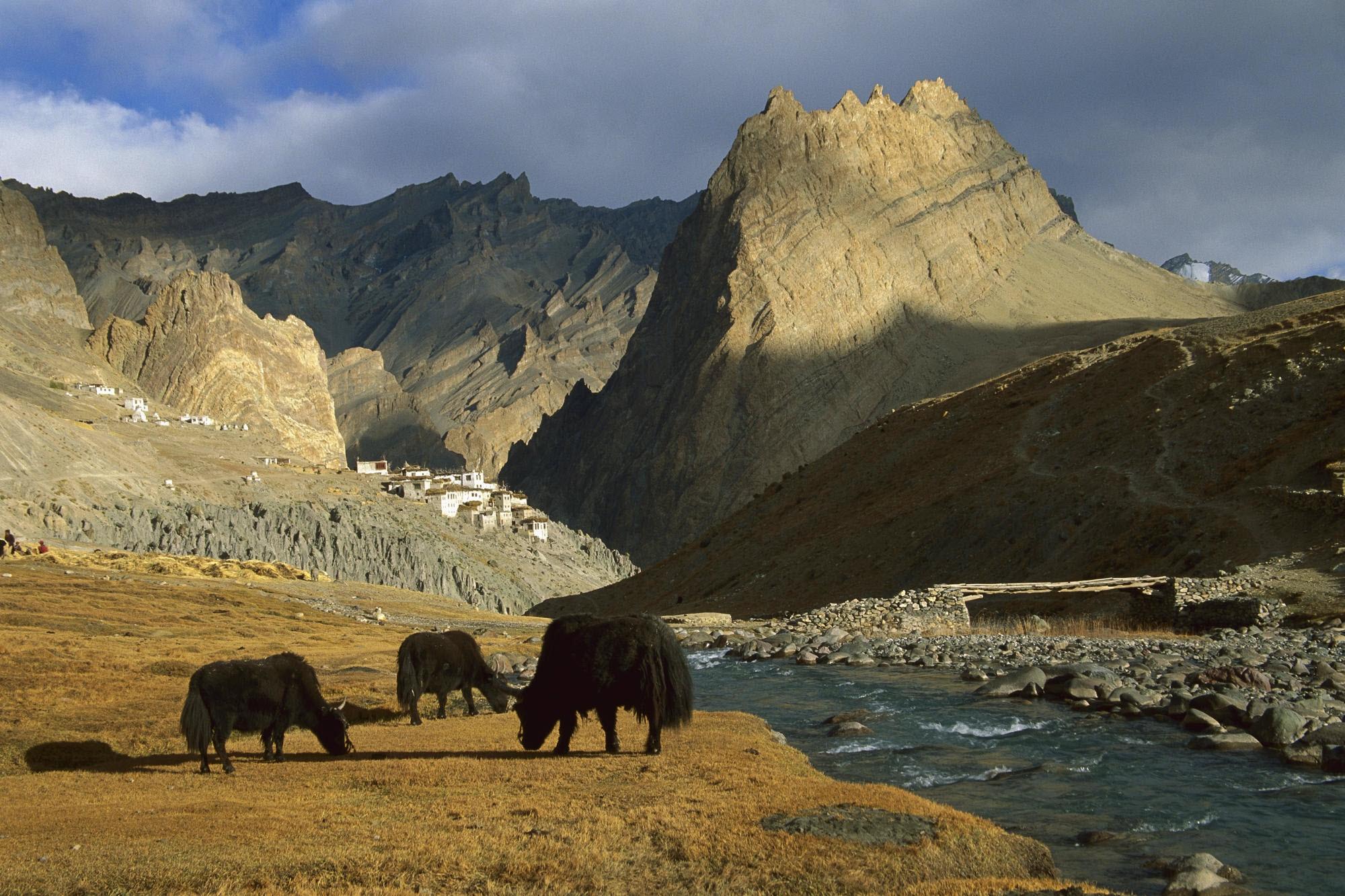 149405 Заставки и Обои Азия на телефон. Скачать Животные, Природа, Река, Горы, Азия, Пастбище картинки бесплатно